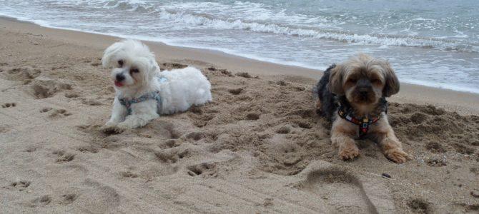 Viaggiare con cani e gatti in Francia