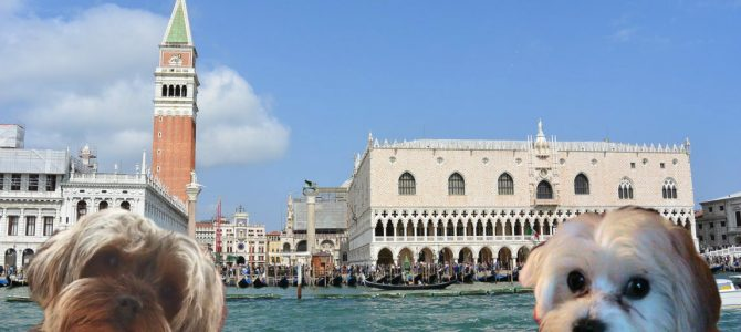 Visitare Venezia con il nostro cane